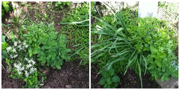 First Garden Plants