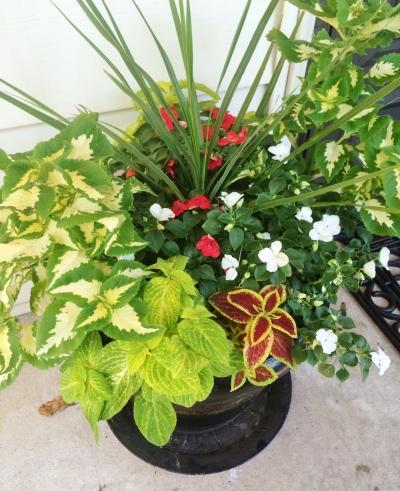 flower pot 117
