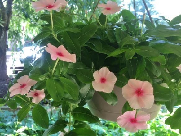 flower pot 127